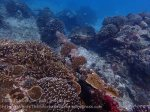 Indo_Lembongan_263_L03_Corals-on-Pipe_20160630_P6300553.jpg