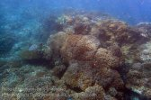 Indo_Lembongan_271_L03_Deeper-Corals_20160630_P6300513.jpg