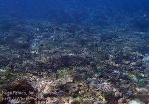 Indo_Lembongan_810_P00_Crystal-Bay-Corals_20160701_P7010638.jpg