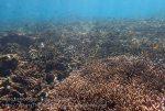 Indo_Lembongan_832_L1b_Corals_20160701_P7010662.jpg
